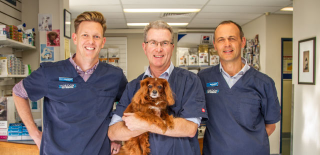 gordon vet hospital partners