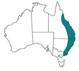 The east coast of Australia is where paralysis ticks are prevalent