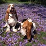 Daisy & Boris Dec 2012