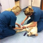 Nurse Amy and Nurse Hollie start getting Henry prepped for surgery
