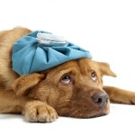 fishers-pet-emergency-care
