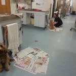 Badger and Rapha waiting for the vomiting injection