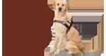 澳大利亚导盲犬协会