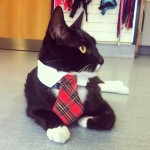 My profile pic for my entry in the Clinic Cat of the Year comp