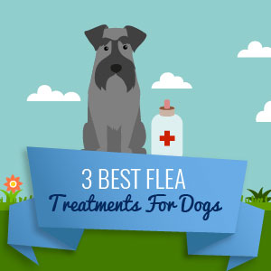 3-best-flea-treatments-for-dogs-thumb