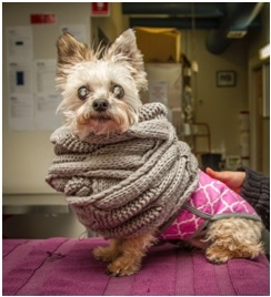 Bindi is looking prepared in her heavy scarf and pink vest!