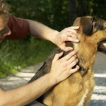 paralysis tick prevention for dogs
