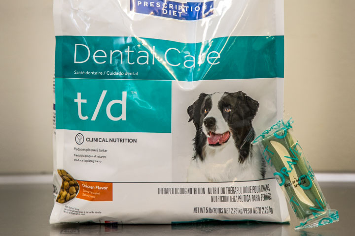 Dental month DOG